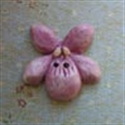 Picture of Violet Mauve