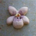 Picture of Native Violet