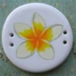Picture of Frangipani