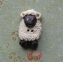 Picture of White Sheep, Black face & feet