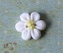 Picture of Little white daisy, Yellow centre