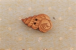 Picture of Wooden Shell